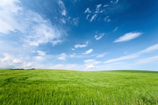 澄んだ空「春の風景」:スマホ壁紙(1)