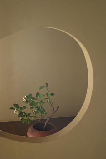 Image「Ikebana, flower arrangement」:スマホ壁紙(15)
