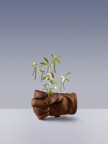 Protective Glove「Green bean plant growing from a garden glove」:スマホ壁紙(7)