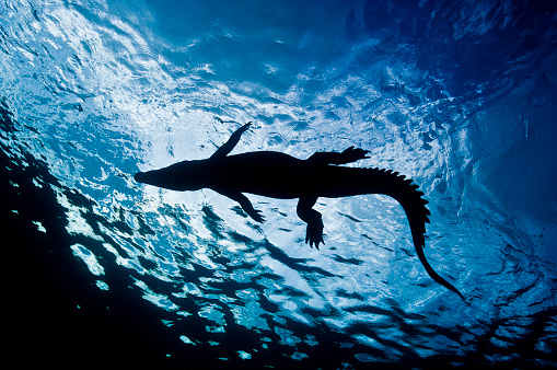Ecosystem「The Underwater World of Micronesia, Oceania.」:スマホ壁紙(3)