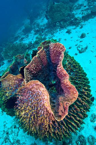 水中「The Underwater World of Philippines.」:スマホ壁紙(18)