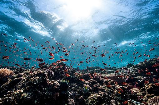 Undersea「The Underwater World of Philippines.」:スマホ壁紙(16)