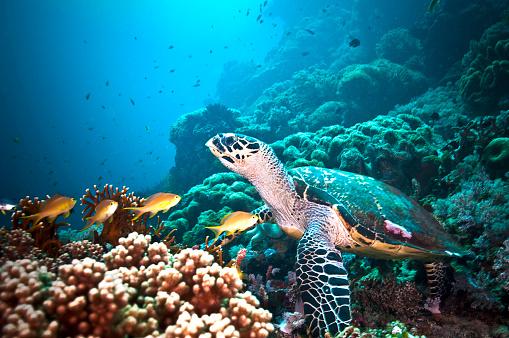 水中「The Underwater World of Philippines.」:スマホ壁紙(14)