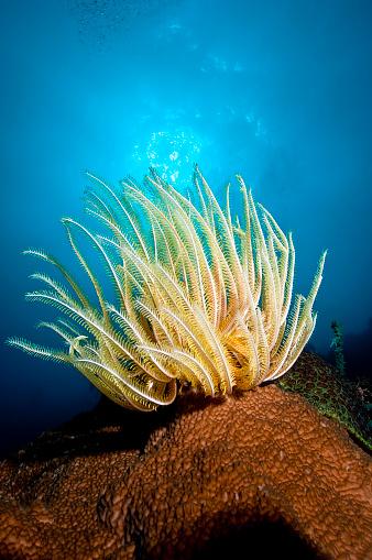 水中「The Underwater World of Philippines.」:スマホ壁紙(16)