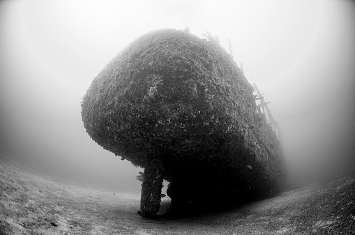 モノクロ「The Underwater World of Philippines.」:スマホ壁紙(4)