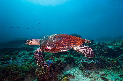 水中「The Underwater World of Philippines.」:スマホ壁紙(15)
