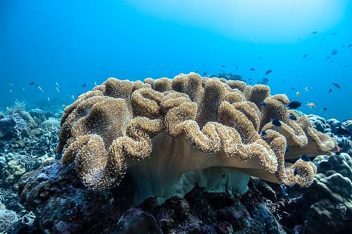 サンゴ「The Underwater World of Philippines.」:スマホ壁紙(18)