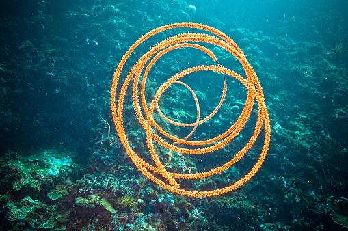 水中「The Underwater World of Philippines.」:スマホ壁紙(19)