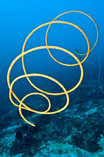 サンゴ「The Underwater World of Philippines.」:スマホ壁紙(15)
