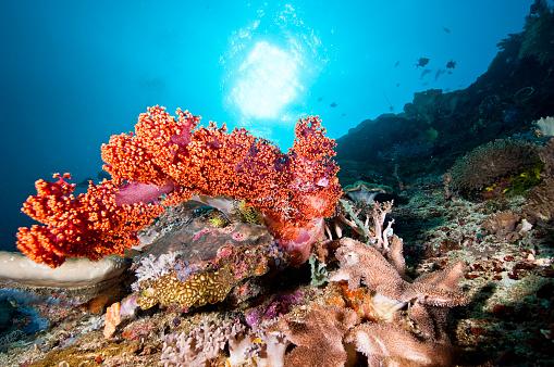 サンゴ「The Underwater World of Philippines.」:スマホ壁紙(19)