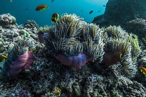 Algae「The underwater world of Maldives.」:スマホ壁紙(2)