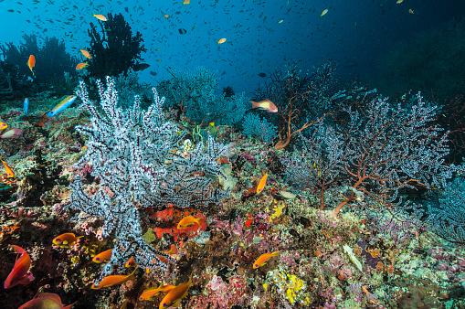 Soft Coral「The underwater world of Maldives.」:スマホ壁紙(1)