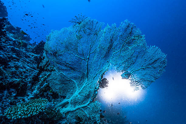 The underwater world of Maldives.:スマホ壁紙(壁紙.com)