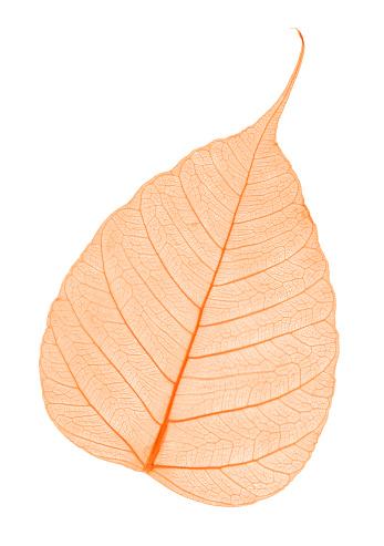 Tilt「Red leaf skeleton」:スマホ壁紙(11)