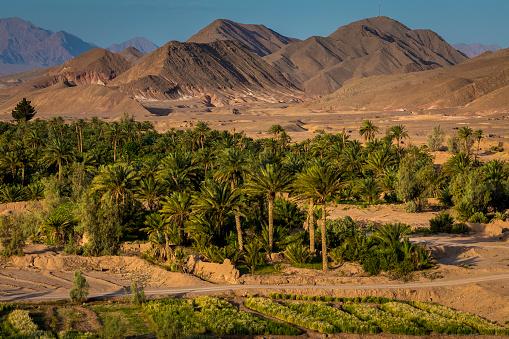 Iran「Date palms around village」:スマホ壁紙(19)