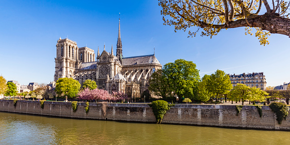 Cathedral「France, Paris, Notre Dame Cathedral at cherry blossom」:スマホ壁紙(19)