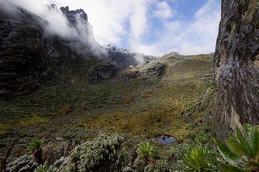 花「View from Mount Stanley from the Kilembe Route, Rwenzori National Park, Kasese District, Uganda」:スマホ壁紙(1)