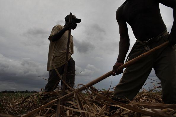 Sugar Cane「Haitians Live Precarious Existence on DR Agricultural Plantations」:写真・画像(15)[壁紙.com]