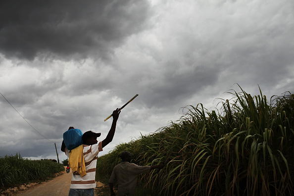 Grass Family「Haitians Live Precarious Existence on DR Agricultural Plantations」:写真・画像(4)[壁紙.com]