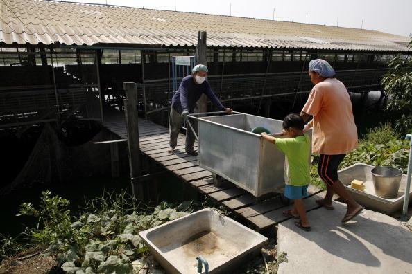 Chicken Meat「Bird Flu Increases The Threat To Chicken Farmers Livelihoods」:写真・画像(4)[壁紙.com]