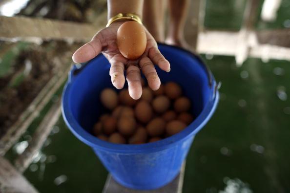 Chicken Meat「Bird Flu Increases The Threat To Chicken Farmers Livelihoods」:写真・画像(5)[壁紙.com]