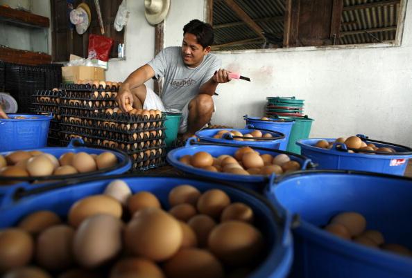 Chicken Meat「Bird Flu Increases The Threat To Chicken Farmers Livelihoods」:写真・画像(6)[壁紙.com]