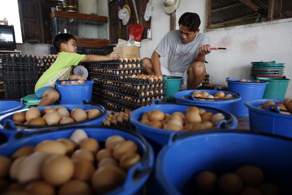 Chicken Meat「Bird Flu Increases The Threat To Chicken Farmers Livelihoods」:写真・画像(7)[壁紙.com]
