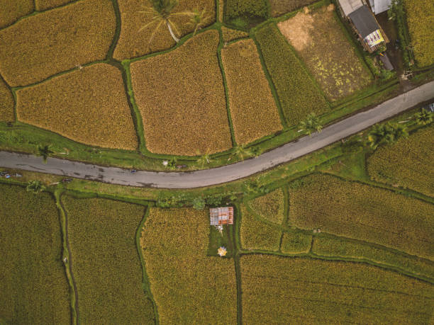 Drone point of view of rice terraces and road in Ubud, Bali, Indonesia:スマホ壁紙(壁紙.com)