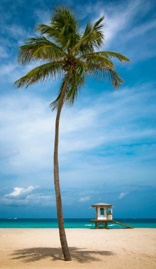 Single Tree「hollywood beach」:スマホ壁紙(13)