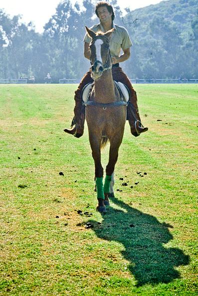 Horse「Sylvester Stallone」:写真・画像(6)[壁紙.com]