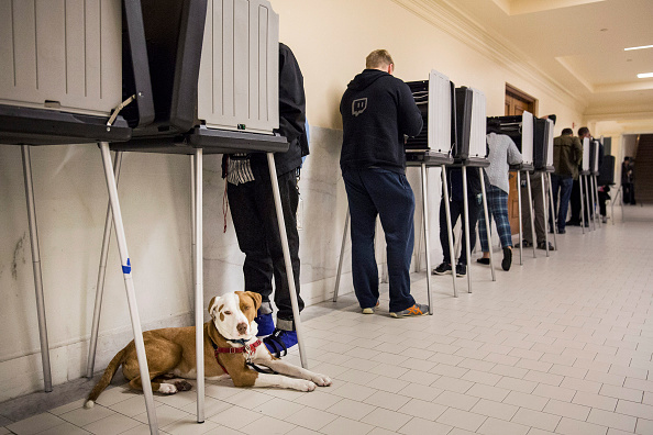 animal「California Voters Go To The Polls In State Primary」:写真・画像(18)[壁紙.com]