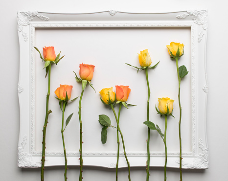 Gender Symbol「The mixing of orange and yellow roses within the confines of a white picture frame」:スマホ壁紙(8)