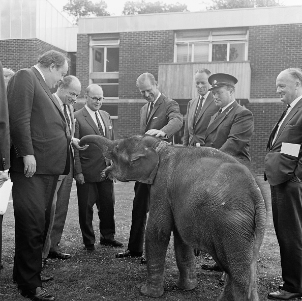 人の役割「Duke Meets Elephant」:写真・画像(2)[壁紙.com]