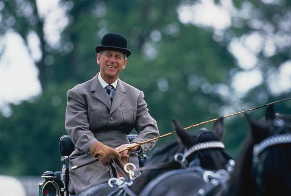 Horse「Philip At The Reins」:写真・画像(10)[壁紙.com]