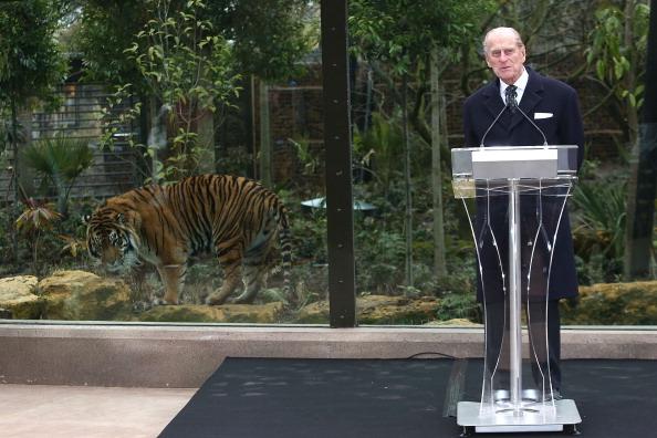 Big Cat「The Duke Of Edinburgh Opens London Zoo's Tiger Territory」:写真・画像(17)[壁紙.com]