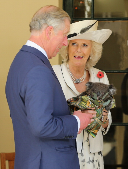 Koala「The Prince Of Wales And Duchess Of Cornwall Visit Australia - Day 3」:写真・画像(19)[壁紙.com]