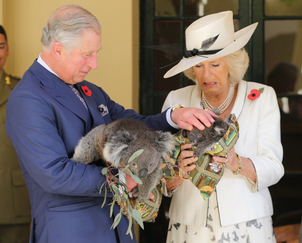Koala「The Prince Of Wales And Duchess Of Cornwall Visit Australia - Day 3」:写真・画像(8)[壁紙.com]