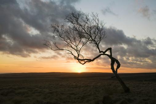 Moor「A Single Leafless Tree In A Field At Sunset」:スマホ壁紙(4)