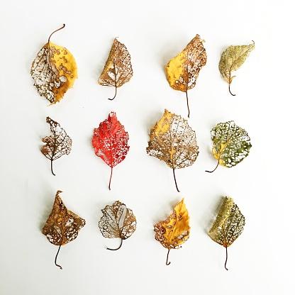 Rotting「Decaying autumn leaves」:スマホ壁紙(17)