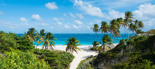 Lesser Antilles「Panoramic View of Bottom Bay Beach and Palm Trees in Barbados」:スマホ壁紙(1)