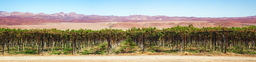 Namibia「Panoramic view of a Namibian vineyard in the southern area」:スマホ壁紙(10)