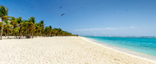 Panoramic view of a white sand beach with coconut trees in the Caribbean sea:スマホ壁紙(壁紙.com)