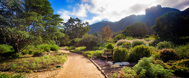 South Africa「Panoramic view of pathway and bench at Kirstenbosch Gardens in Cape Town」:スマホ壁紙(15)