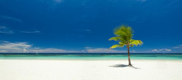 Roatan「Panoramic view of single palm tree on tropical beach」:スマホ壁紙(8)