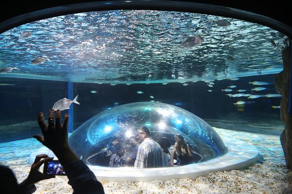"Visit「Rio De Janeiro's New ""AquaRio"" Aquarium Becomes Latin America's Largest」:写真・画像(5)[壁紙.com]"