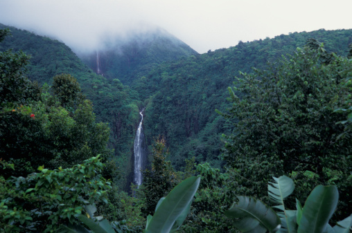 French Overseas Territory「Guadeloupe waterfall National Park」:スマホ壁紙(15)