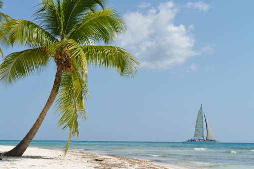 Eco Tourism「Sailboat passing by tropical beach」:スマホ壁紙(5)