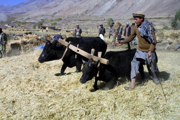 Kabul「Afgan Farmers North of Kabul」:写真・画像(14)[壁紙.com]