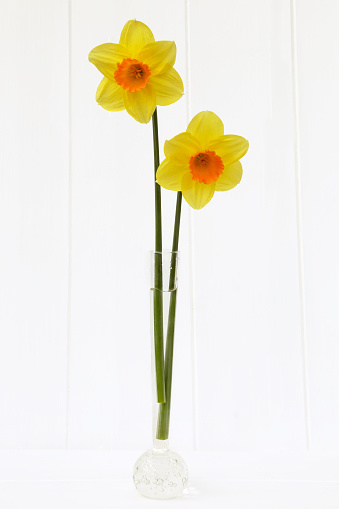 水仙「Daffodils, tall slim and together.」:スマホ壁紙(1)