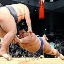 豊ノ島 大樹壁紙の画像(壁紙.com)